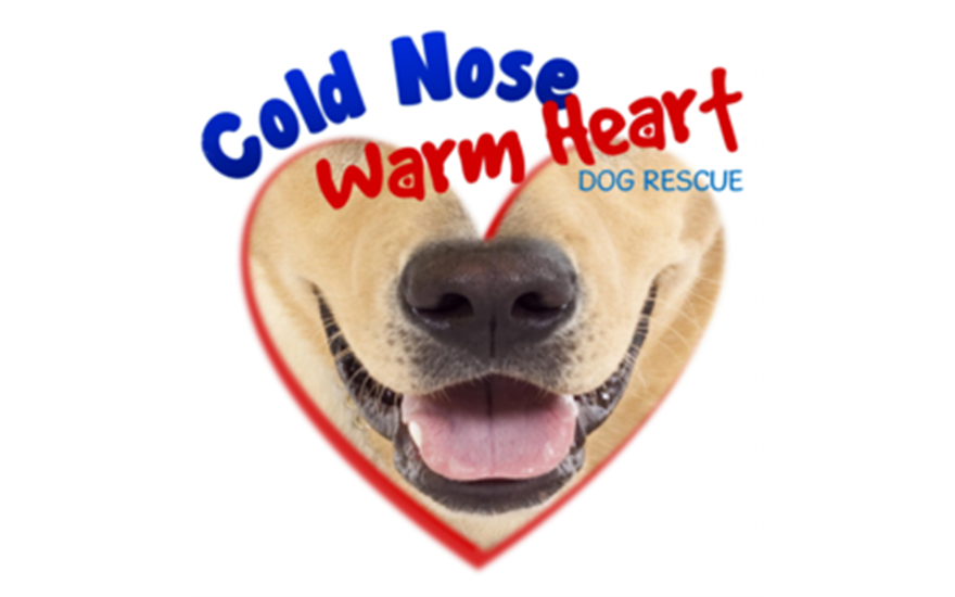 Cold Noise Warm Heart