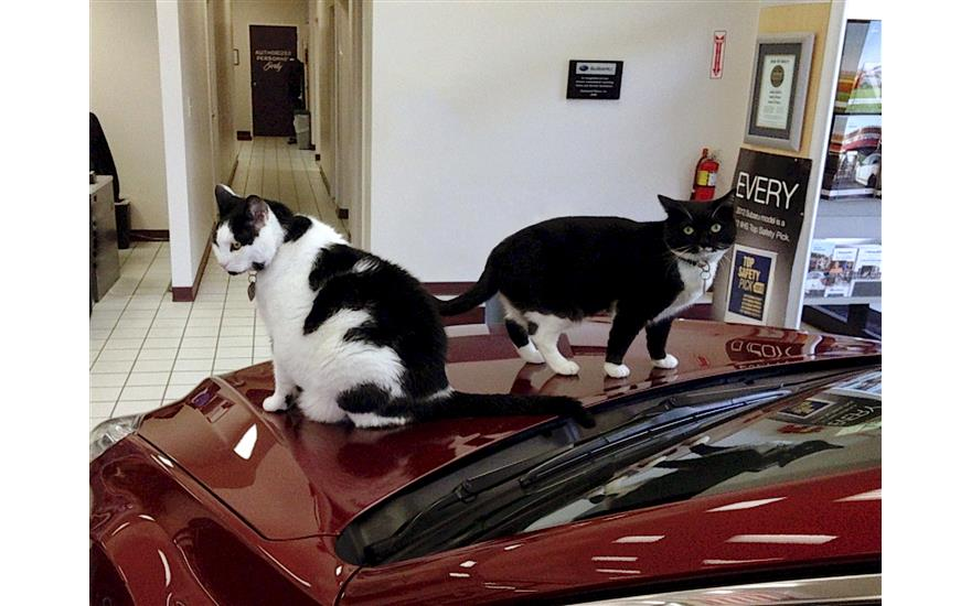 Two Cats Found A Forever Home At Capitaland