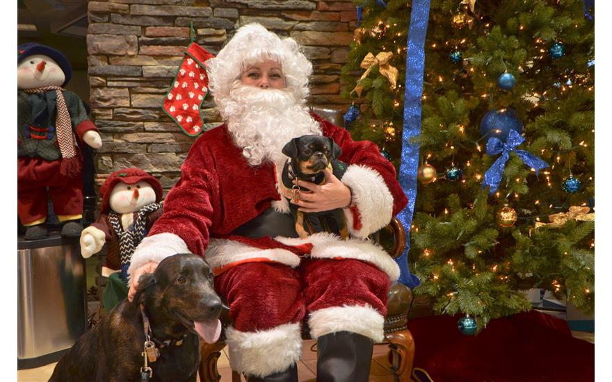 ANIMAL FRIENDS BRINGS SANTA TO DAY APOLLO!
