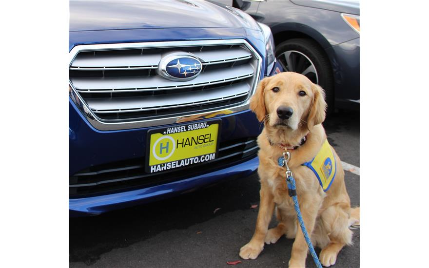 Subaru and Canine Companions: A Perfect Match