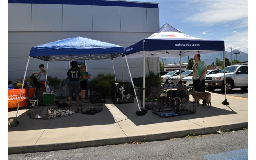Pet Adoption Day at Nate Wade Subaru