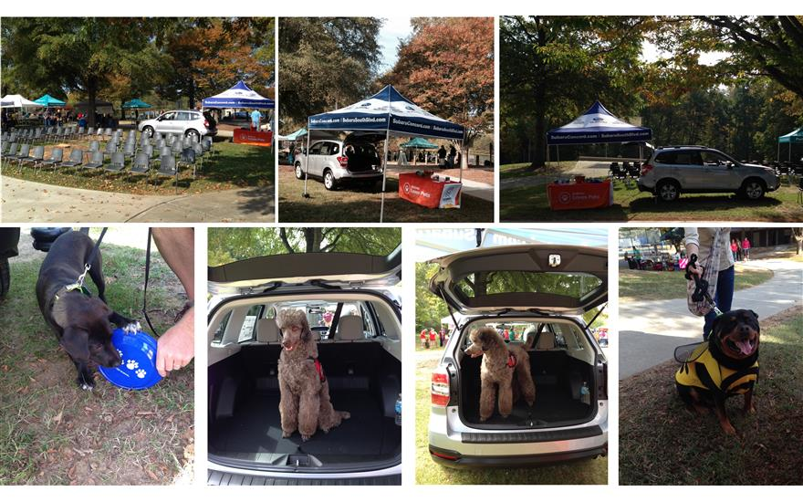2015 Dogs Day Out