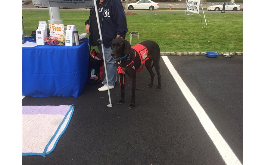 Liberty Subaru Pet Adoption Event