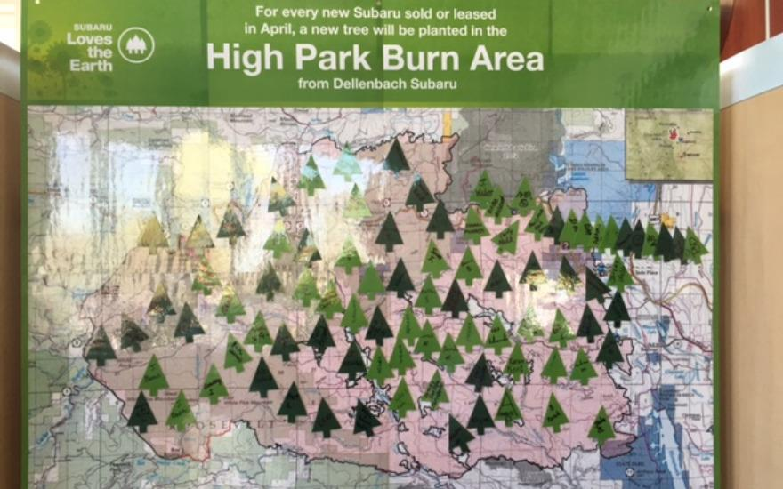 High Park Fire Burn Area Tree Planting