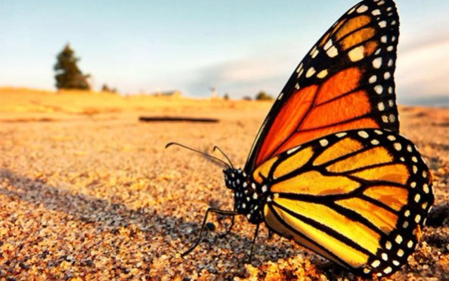 Doing Our Part To Save The Butterflies