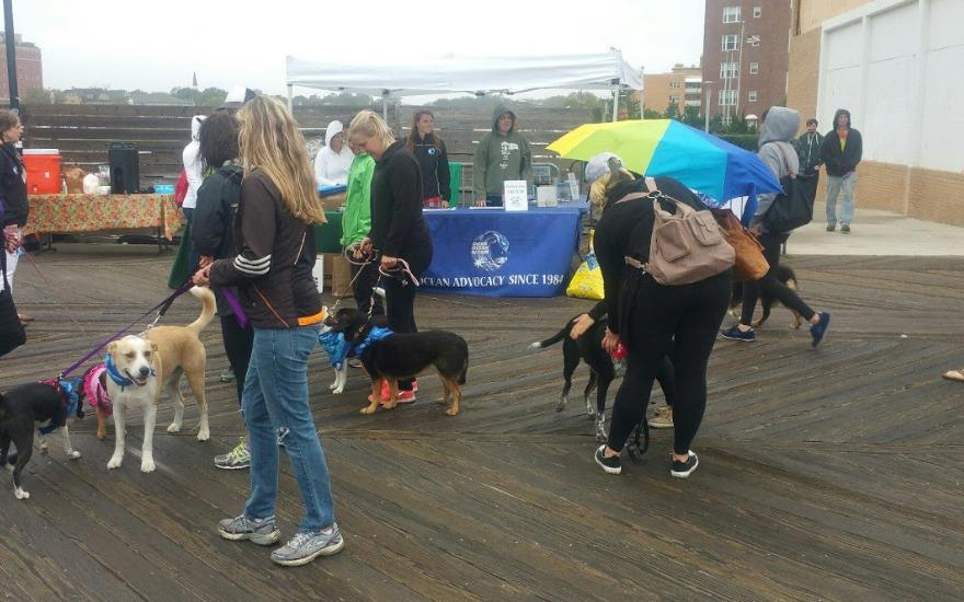 Sandy Paws Dog Walk & Beach Clean-Up