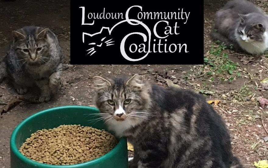 Subaru Loves Pets-Loudoun Community Cat Coalition