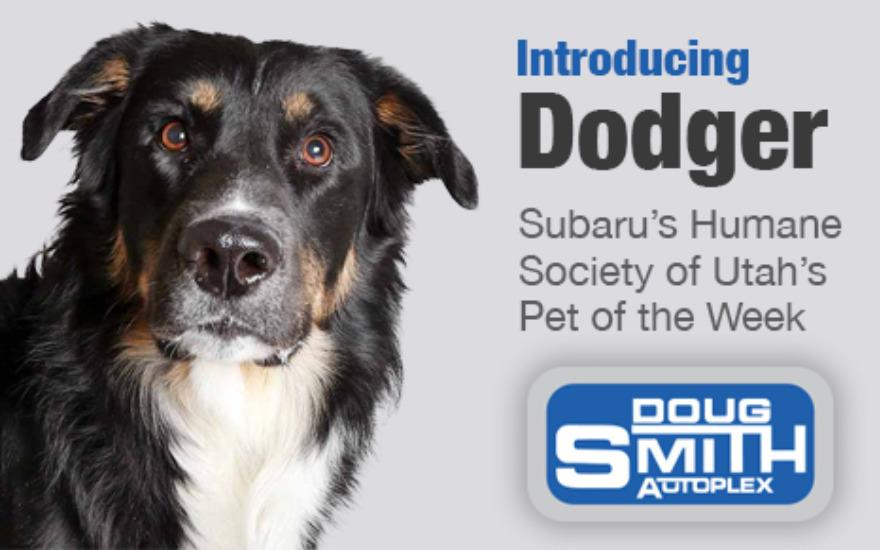 Subaru's Humane Society Pet of the Week