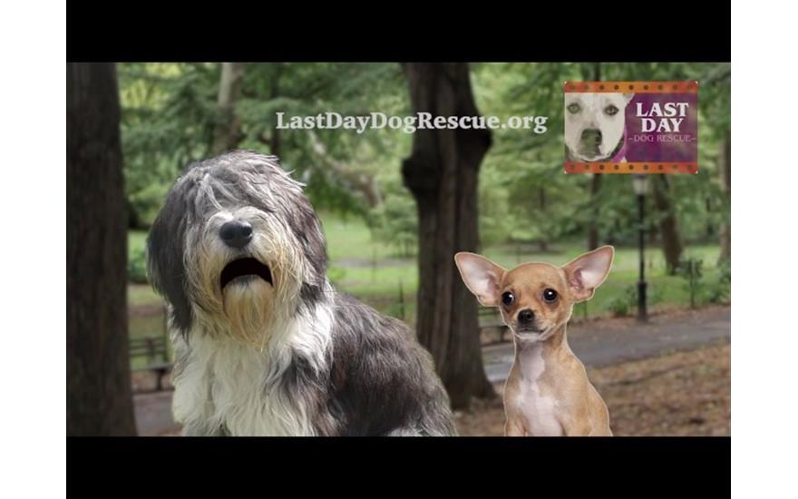 Last Day Dog Rescue Partners with Lafontaine!