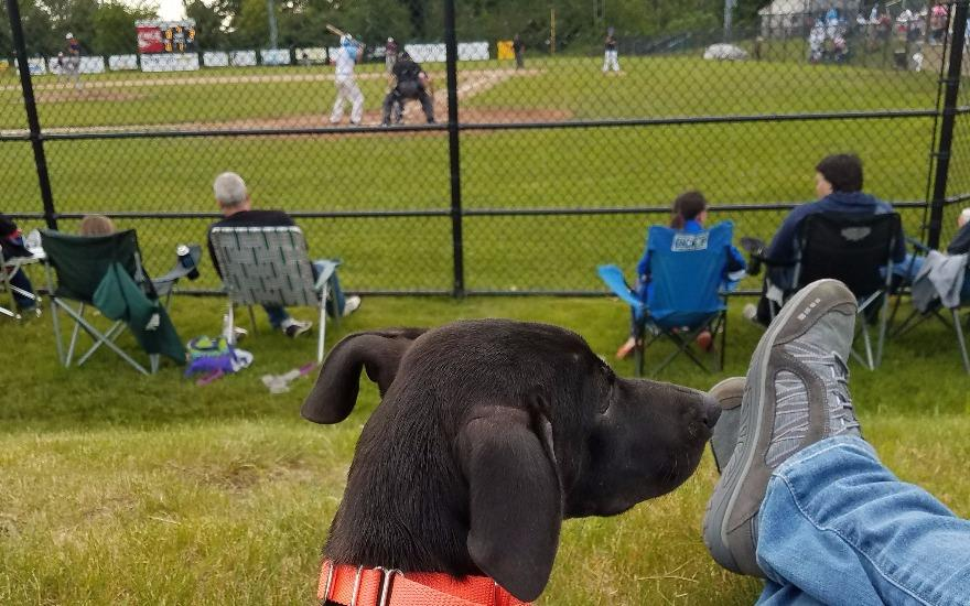 Belknap Subaru & NHHS host Bark at the Ball Park