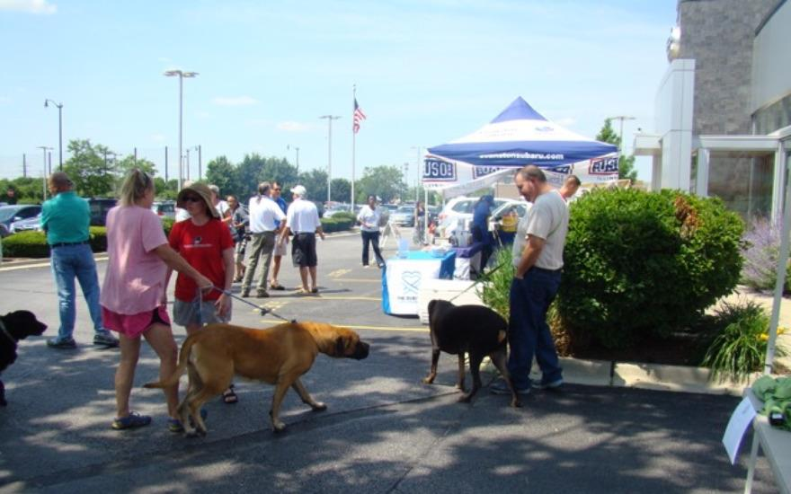Dog Wash at Evanston Subaru Cleans 87 Pets