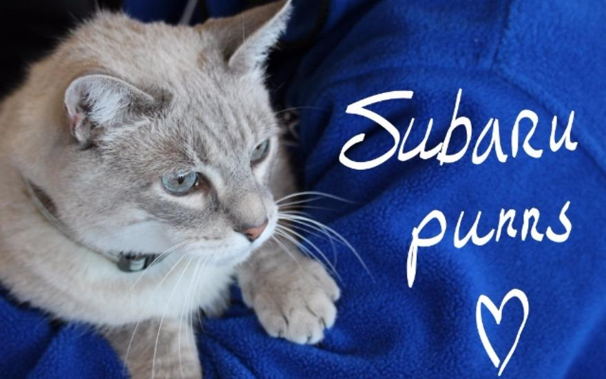 Subaru of Wakefield Shares the Love with PAWS