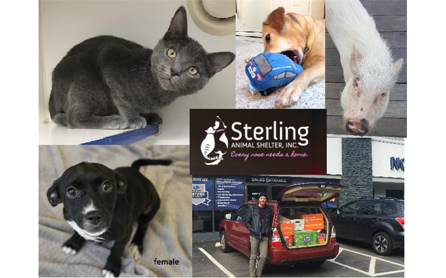 Sterling Animal Shelter & North End Subaru Pets