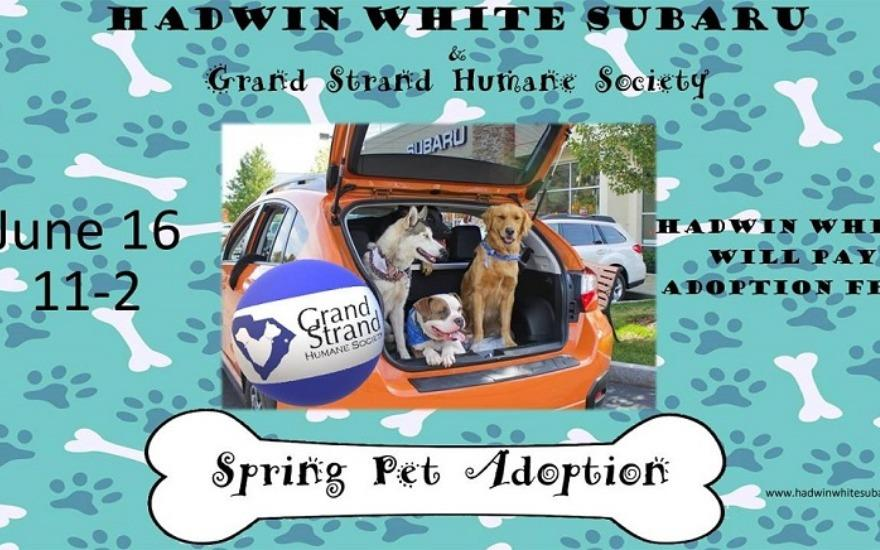 Hadwin White Pet Adoption