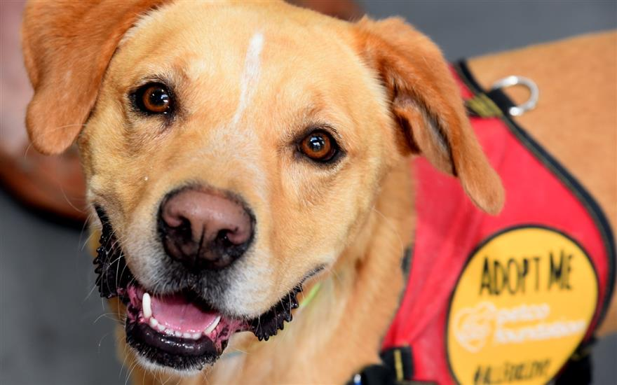 Dog gets adopted at Yappy Hour