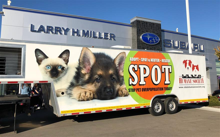 Helping Local Animals for Subaru Loves Pets Month