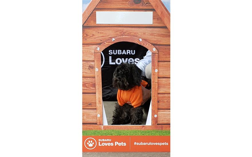2018 Subaru Loves / Pets Adoption Day