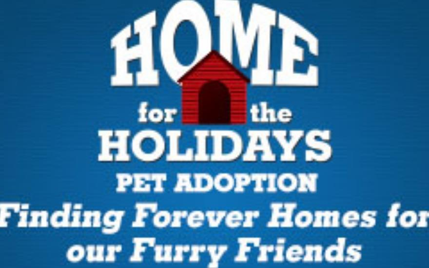 Subaru Home for the Holidays Pet adoptions