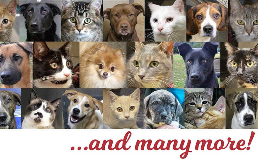 Adoption Drive Finds 78 Forever Homes