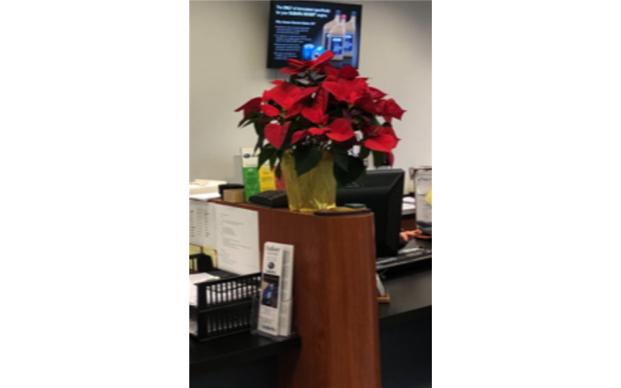 Poinsettias's for a Perfect Cause
