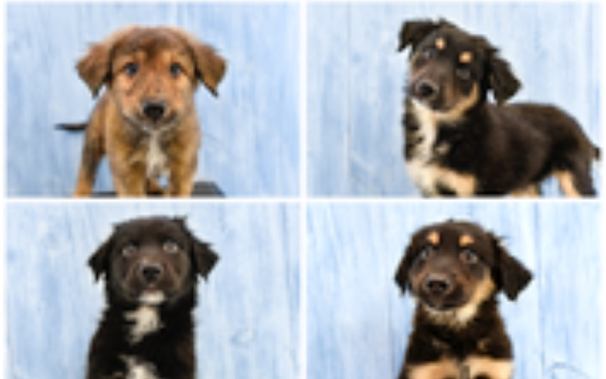 Nuzzles & Co. Rescue Dogs go to loving homes