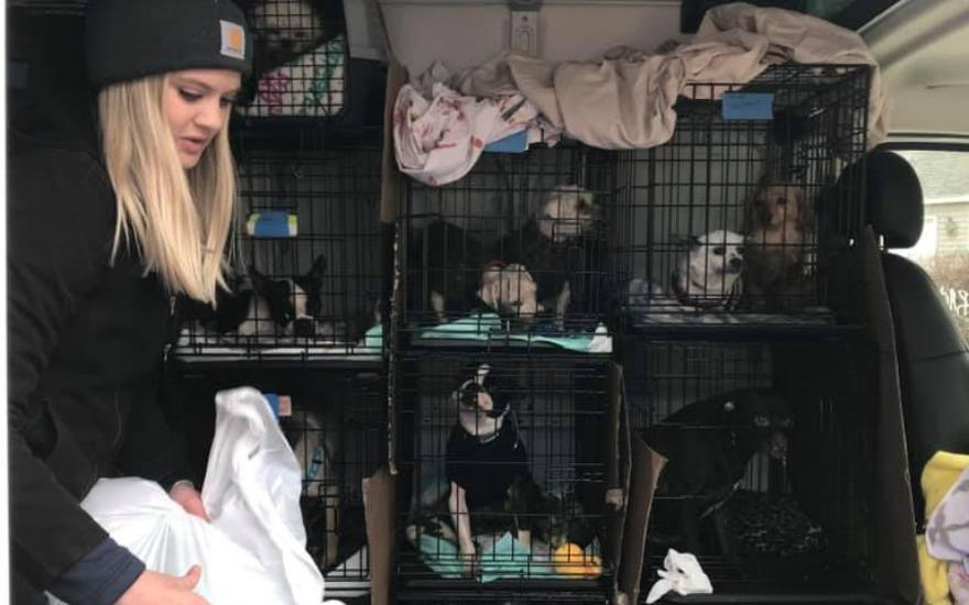 Subaru helps save 30 dogs from hoarding situation
