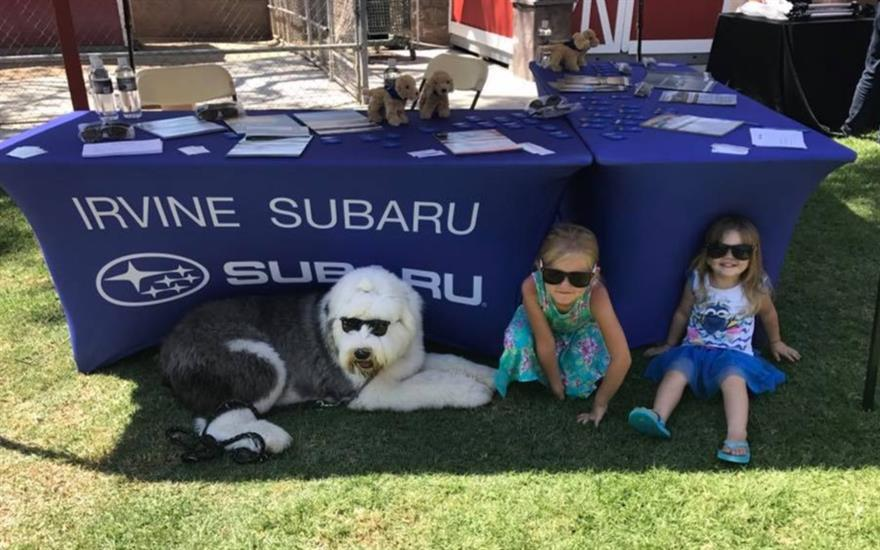 Subaru is a wonderful support to animal rescues