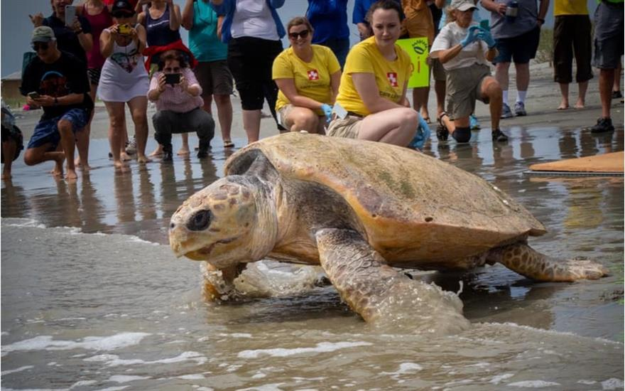 Crews Cares for Sea Turtles at the South Carolina