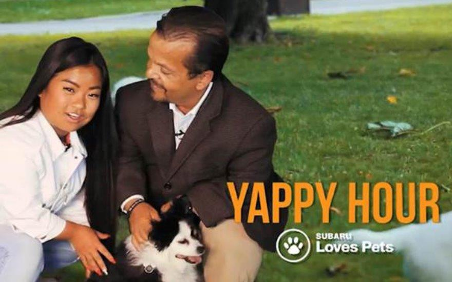 Yappy Hour!  Making a dogs day!