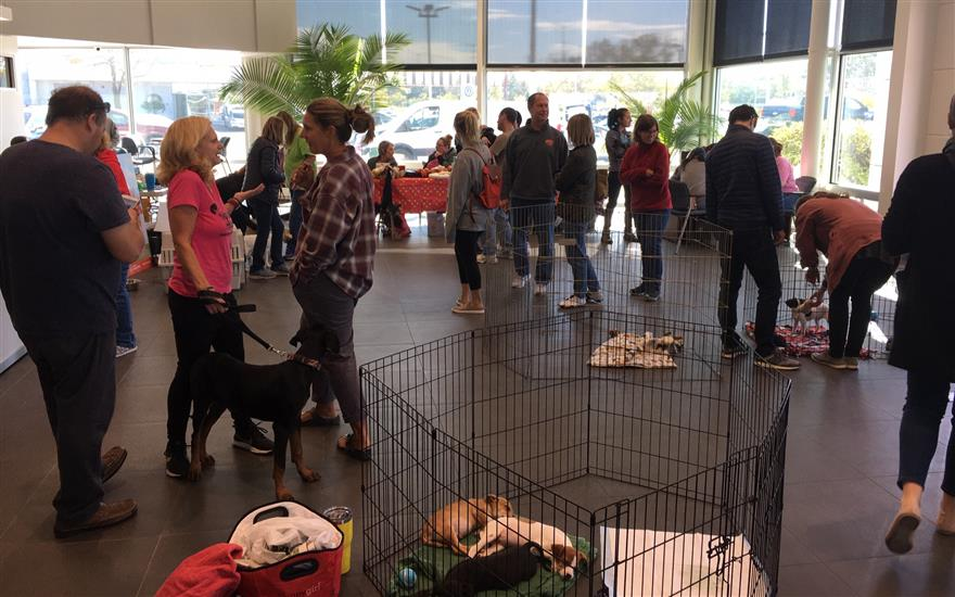 Muller Subaru Annual Per Adoption Event