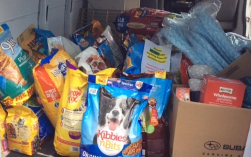First Team helps find pets FUR-EVER homes