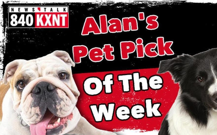 Subaru of Las Vegas Pet Pick of the Week
