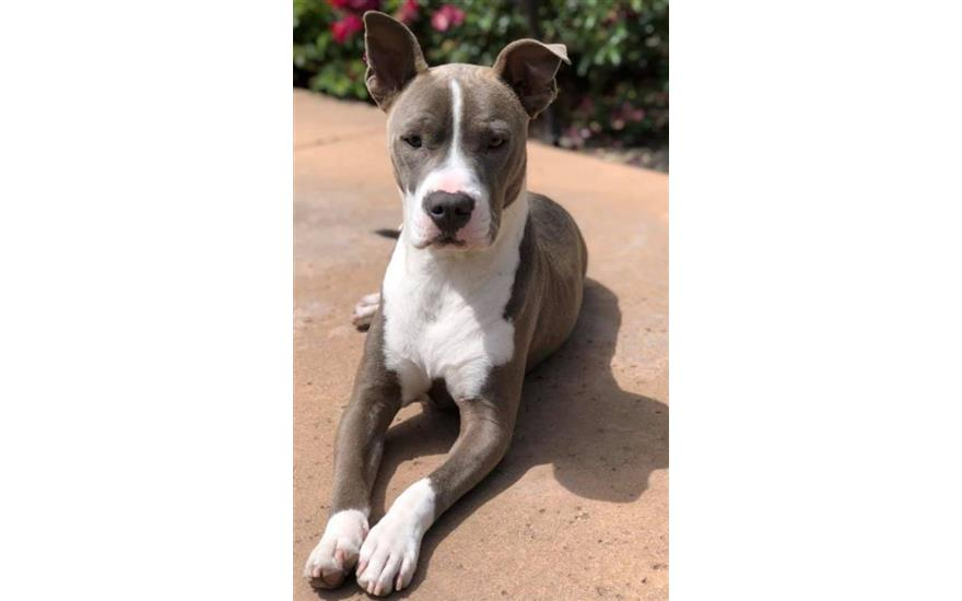 Placer SPCA Share the Love Story