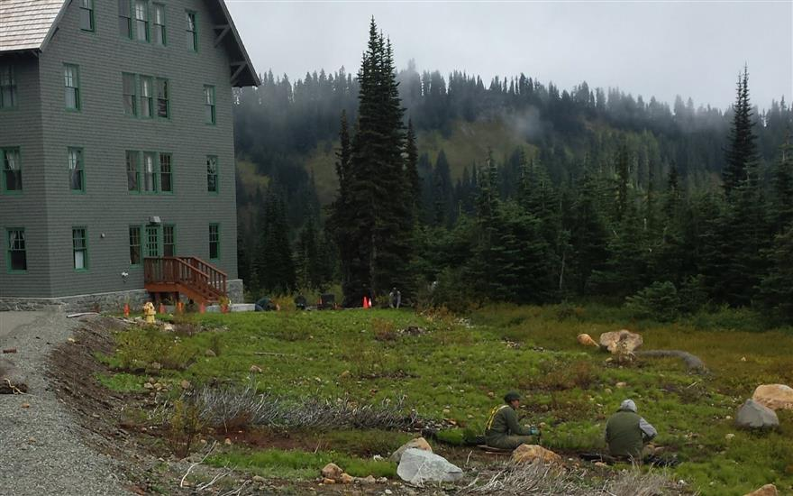 Replanting Paradise Meadows at Mount Rainier