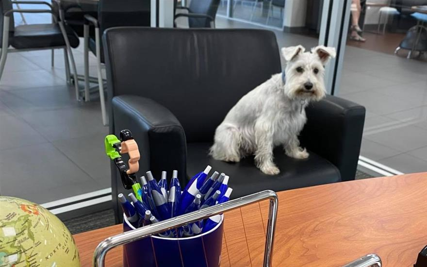 Peacock participates in Take Your Dog To Work Day