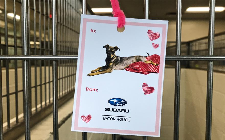 Companion Animal Alliance thanks Subaru!!!