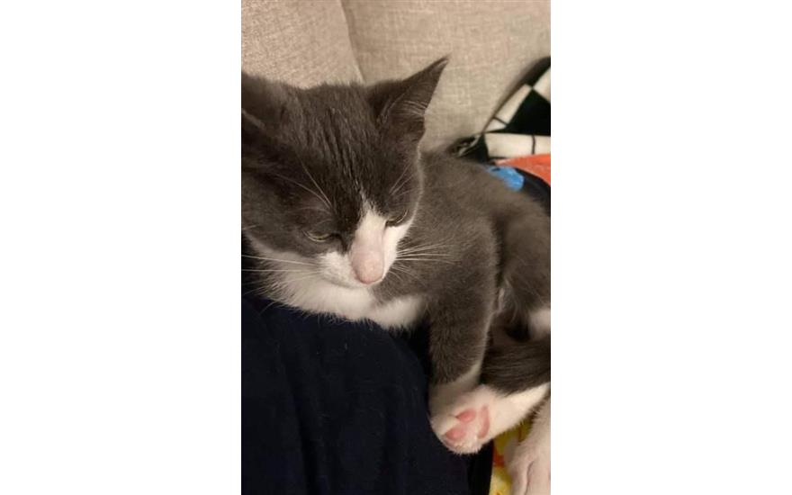Kitten Thrown from Vehicle Finds Forever Home