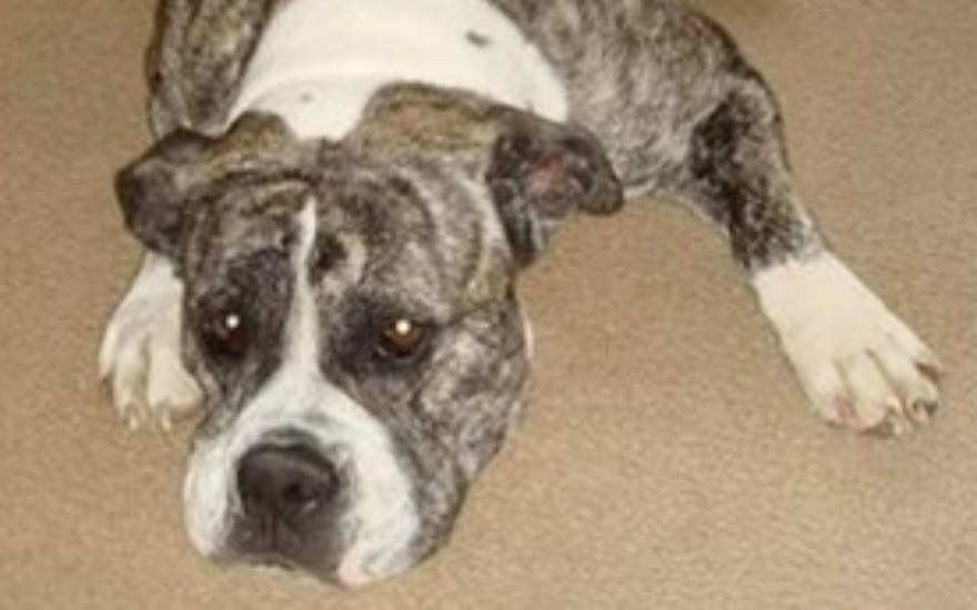 Holly Get's A Forever Home