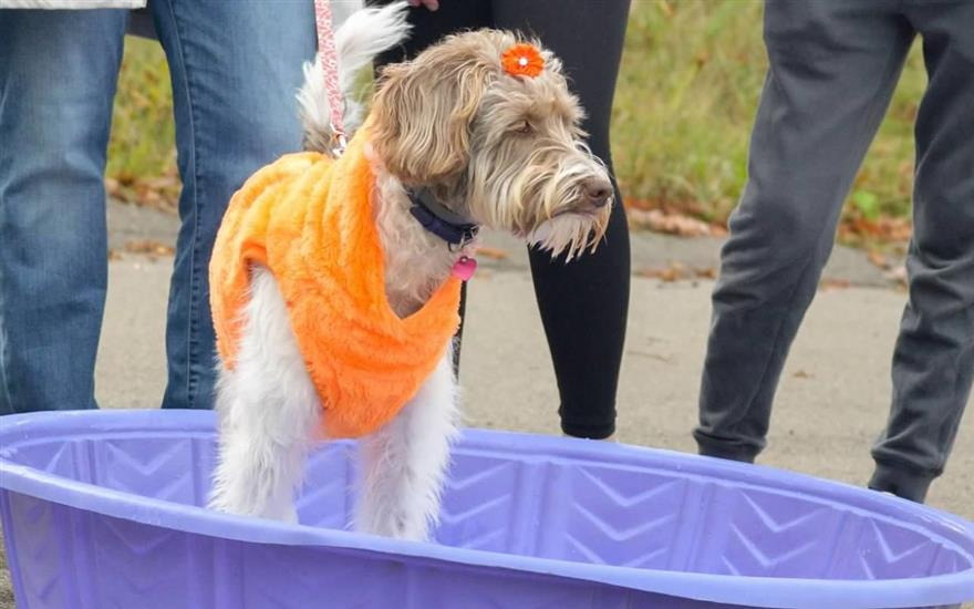 Trick or Treating at Animal Friends with Subaru