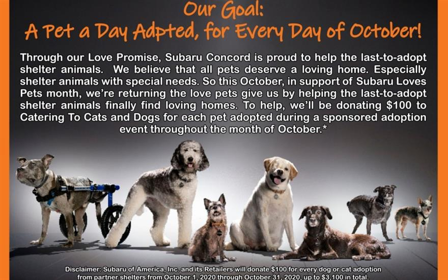 Subaru Concord Loves Catering to Cats and Dogs!