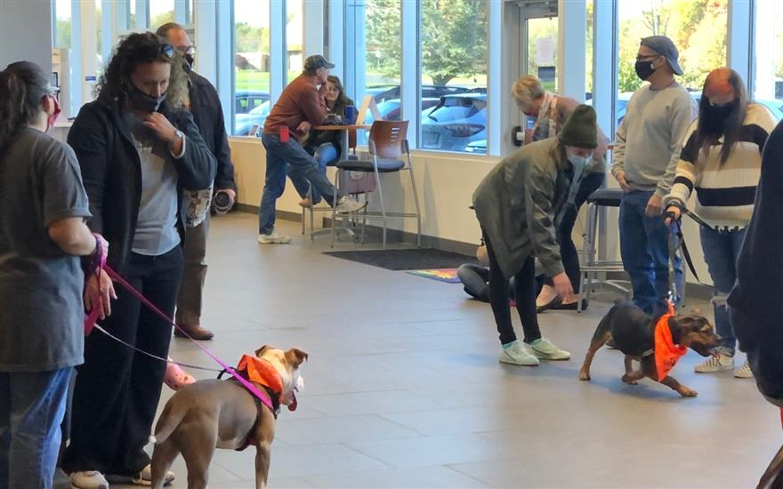 Every Dog Matters Adoption Event