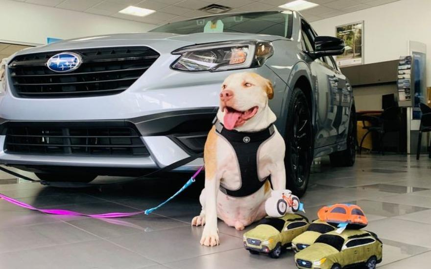 Heritage Subaru  Helps a Senior Dog Find a Home!