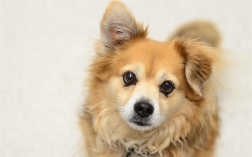 Helping Homeless Pets Like Rusty Find New Homes