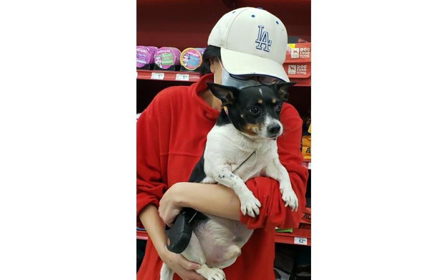 Sellers Helps Shelter Animals Find Homes