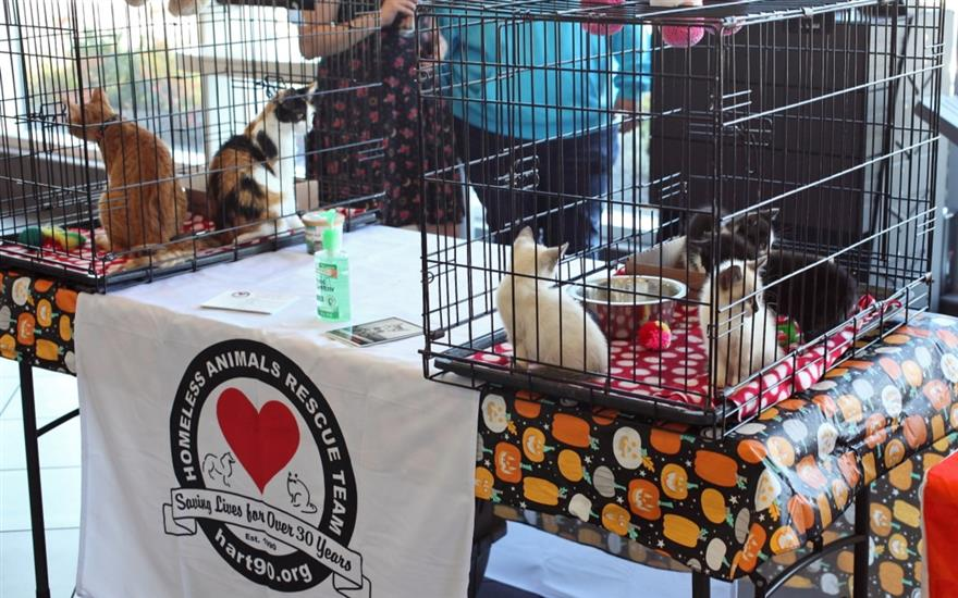 A Special Day for HART's Dogs!