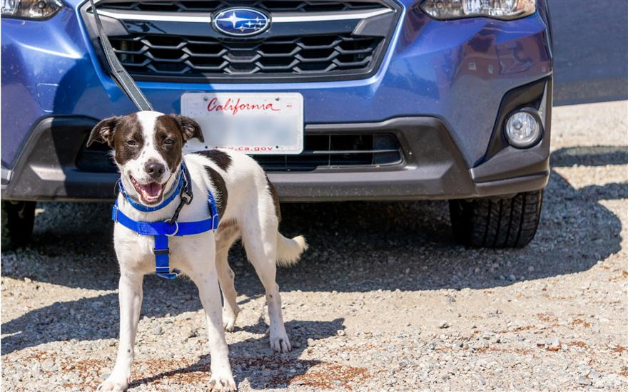 Carlsen Subaru Sponsors 30 Animals at Pets In Need