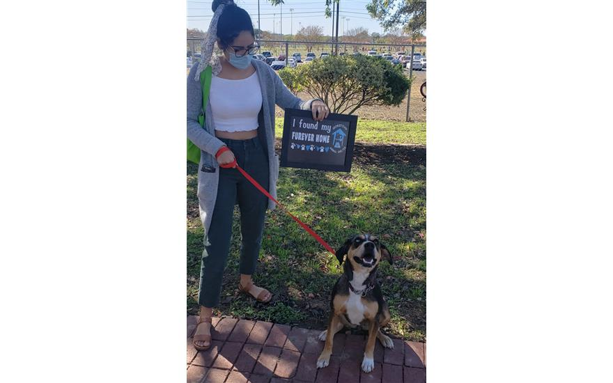 Ruby Finds Furever Love - Gtown Animal Shelter