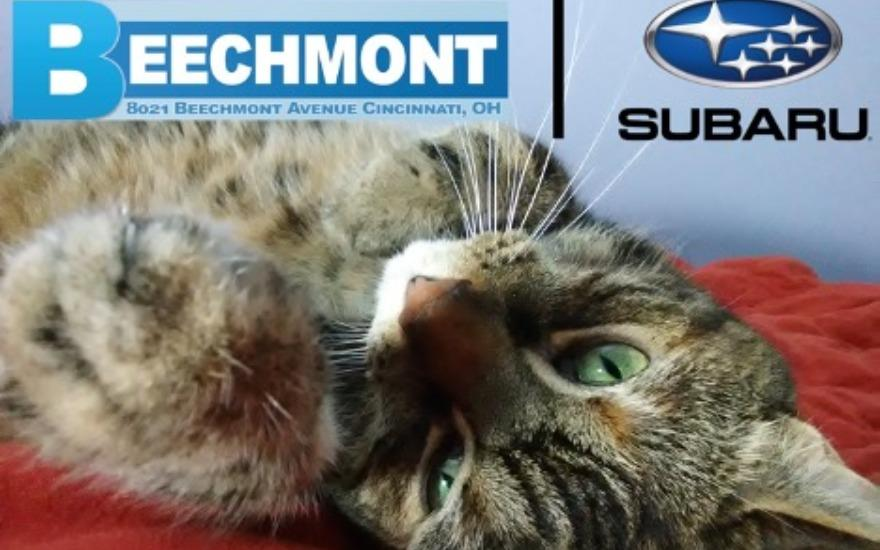 Free Pet Adoptions, thanks to Beechmont Subaru.