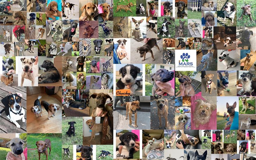 161 Pets Find Their Forever Home!