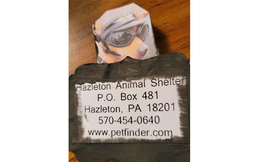 Hazleton Animal Shelter Association